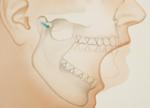 mouth diagram
